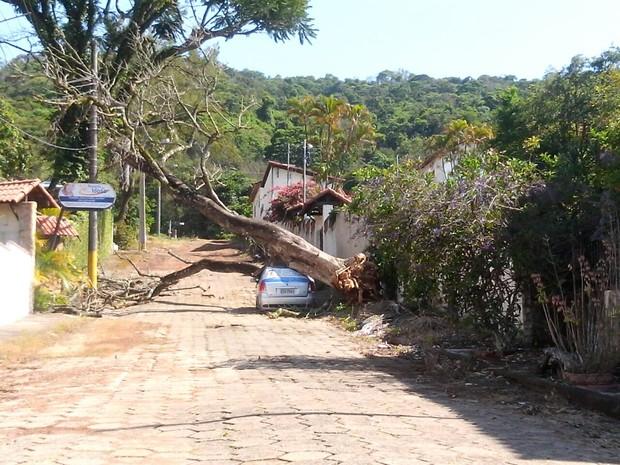 Vento forte derruba árvore em Lambari (MG). (Foto: Eriton Almeida)