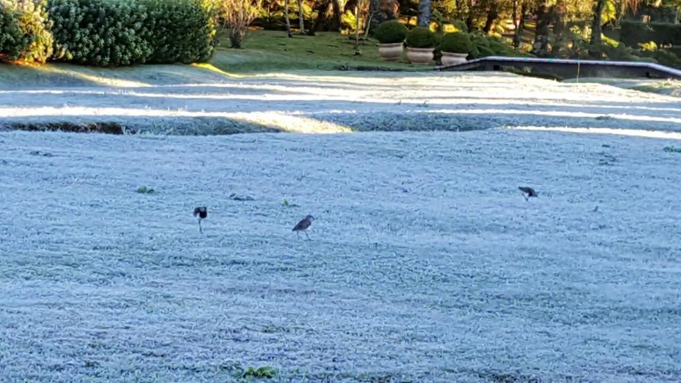 Segundo Inmet, Monte Verde registrou 0,5ºC na madrugada e 0,2°C às 7h deste domingo (11) (Foto: Nelson Pacheco)